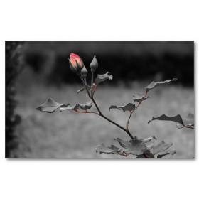 Αφίσα (τριαντάφυλλο, σκοτάδι, φύλλα, στέλεχος, λουλούδι, μαύρο, λευκό, άσπρο)